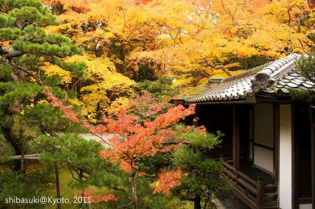 20111129_Kyoto-231_大德寺高桐院_1.JPG