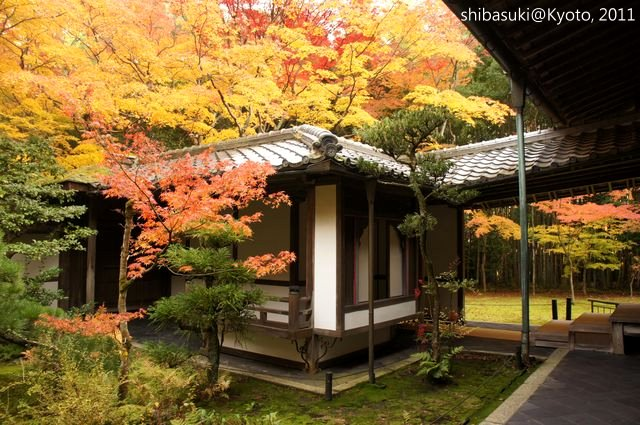 20111129_Kyoto-235_大德寺高桐院_1.JPG