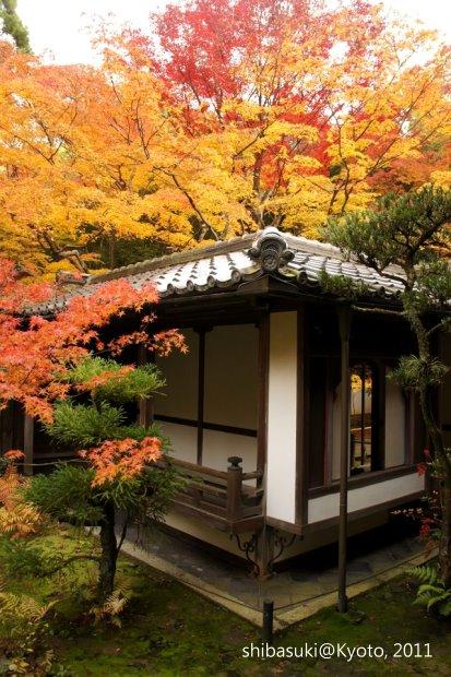 20111129_Kyoto-237_大德寺高桐院_1.JPG