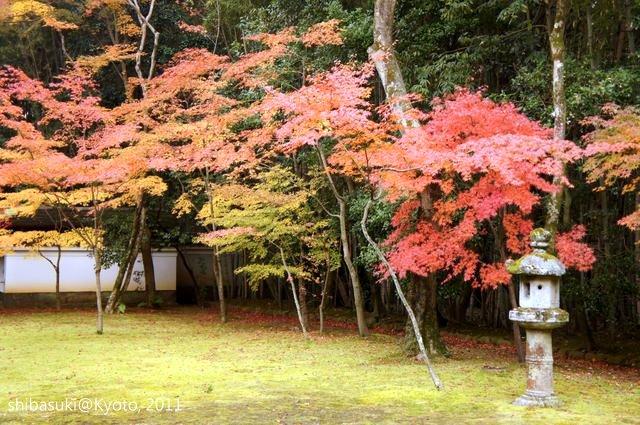 20111129_Kyoto-254_大德寺高桐院_1.JPG