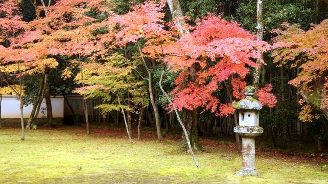20111129_Kyoto-255_大德寺高桐院_1.JPG