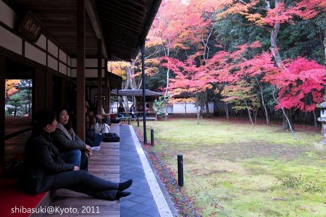 20111129_Kyoto-256_大德寺高桐院_1.JPG