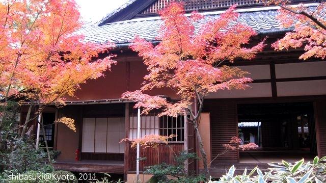 20111129_Kyoto-258_大德寺高桐院_1.JPG