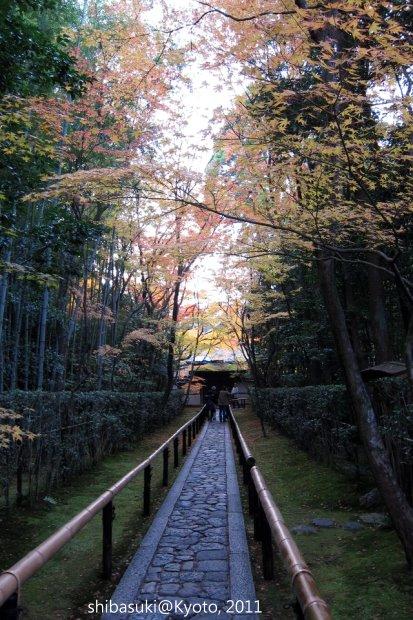 20111129_Kyoto-268_大德寺高桐院_1.JPG