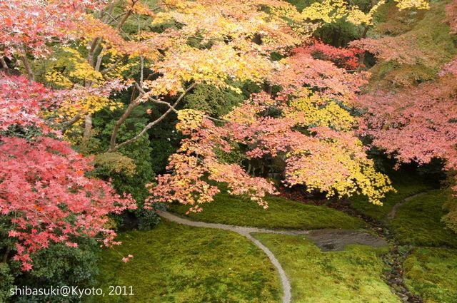 20111130_Kyoto-33_八瀨琉璃光院_1.JPG