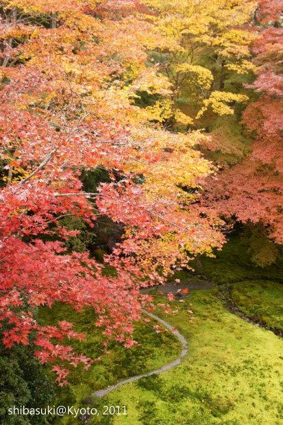 20111130_Kyoto-52_八瀨琉璃光院_1.JPG