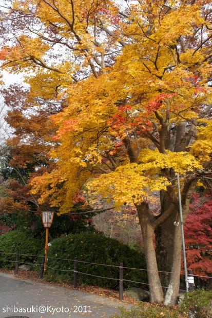 20111130_Kyoto-84_八瀨_1.JPG