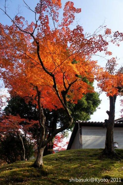 20111130_Kyoto-97_曼殊院門跡_1.JPG