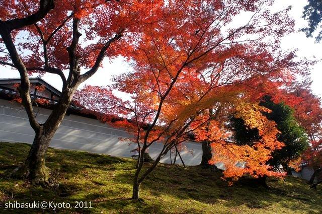 20111130_Kyoto-98_曼殊院門跡_1.JPG