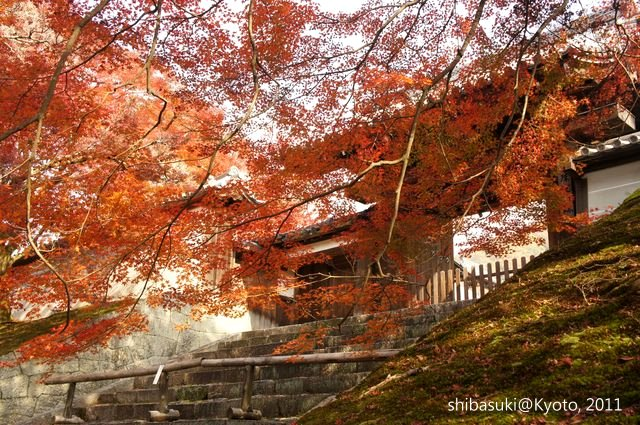 20111130_Kyoto-105_曼殊院門跡_1.JPG
