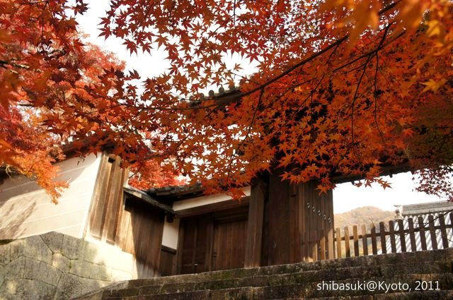 20111130_Kyoto-109_曼殊院門跡_1.JPG
