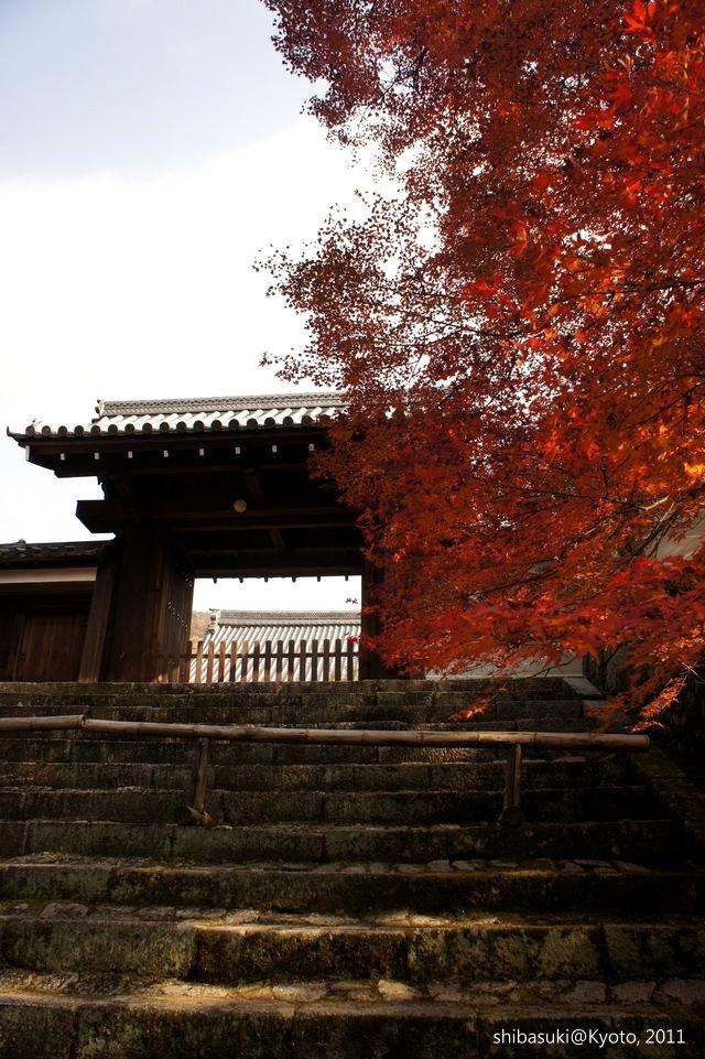 20111130_Kyoto-114_曼殊院門跡_1.JPG