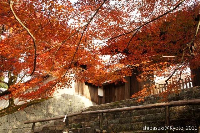 20111130_Kyoto-116_曼殊院門跡_1.JPG