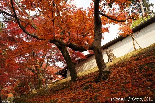 20111130_Kyoto-123_曼殊院門跡_1.JPG
