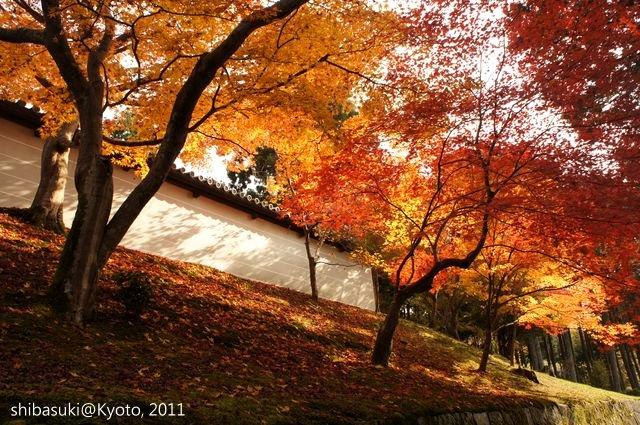 20111130_Kyoto-131_曼殊院門跡_1.JPG
