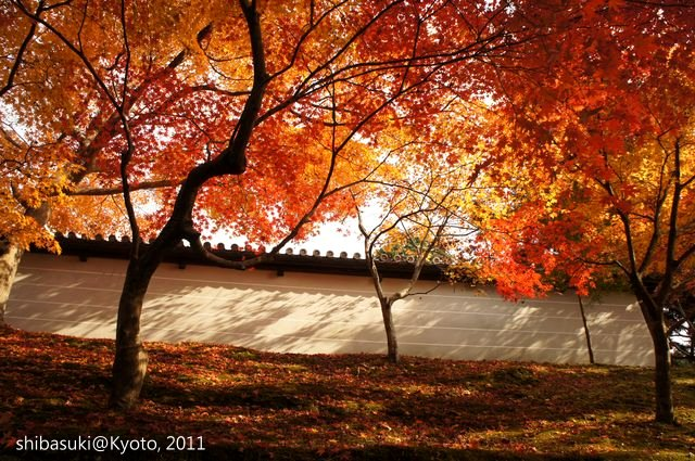 20111130_Kyoto-135_曼殊院門跡_1.JPG