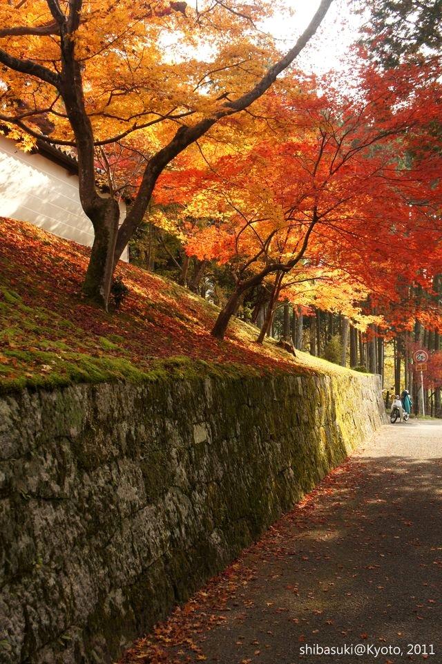 20111130_Kyoto-142_曼殊院門跡_1.JPG