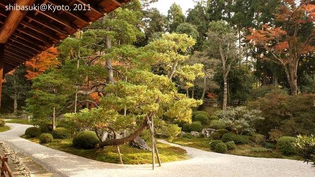 20111130_Kyoto-144_曼殊院門跡_1.JPG