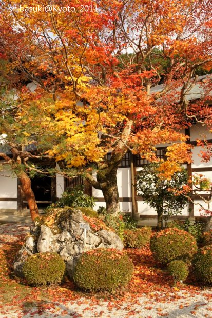 20111130_Kyoto-165_圓光寺_1.JPG