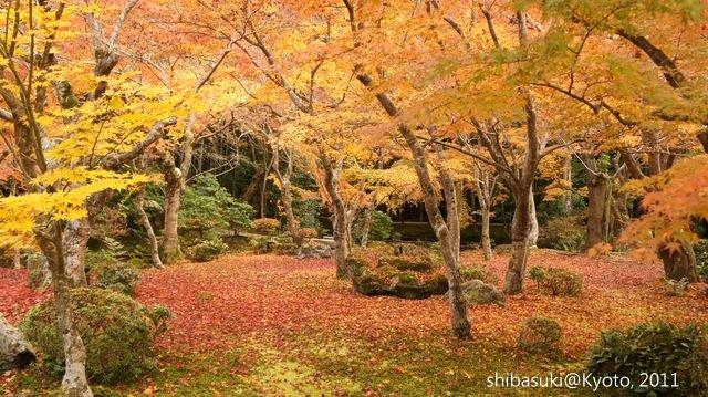 20111130_Kyoto-181_圓光寺_1.JPG