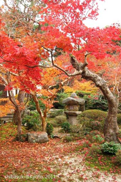 20111130_Kyoto-188_圓光寺_1.JPG