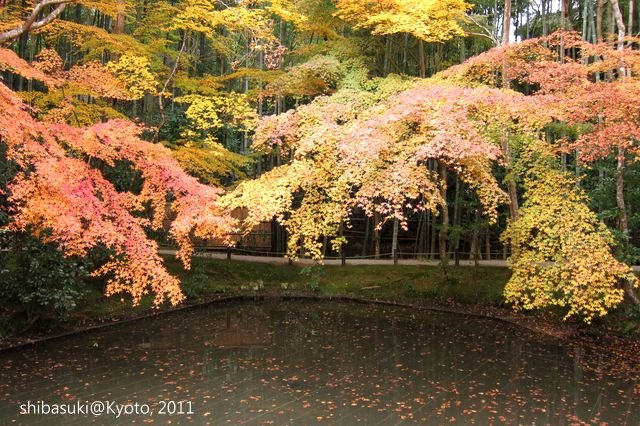 20111130_Kyoto-196_圓光寺_1.JPG