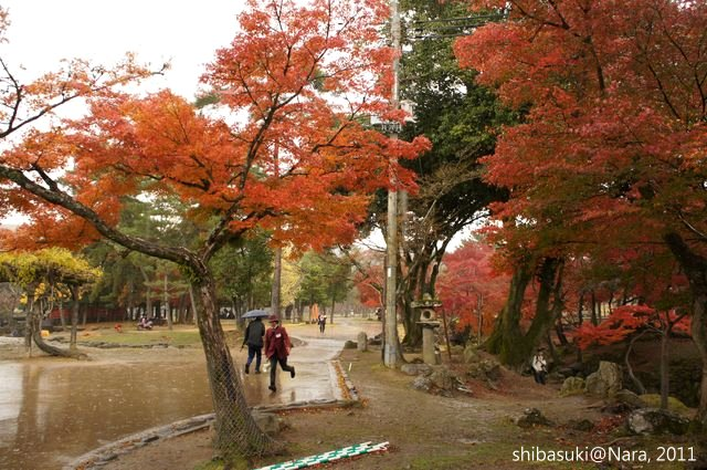 20111203-Nara_29_1.JPG