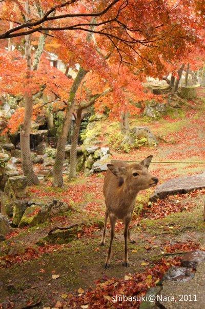 20111203-Nara_31_1.JPG