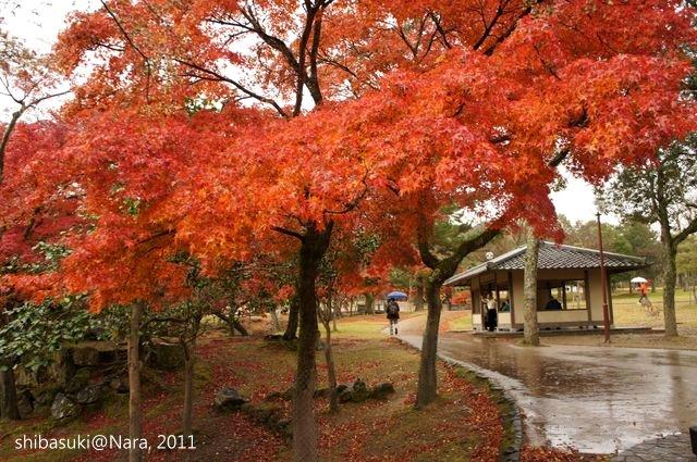 20111203-Nara_37_1.JPG