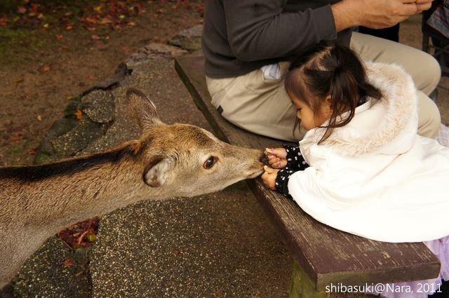 20111203-Nara_39_1.JPG