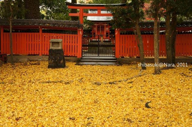 20111203-Nara_42_1.JPG