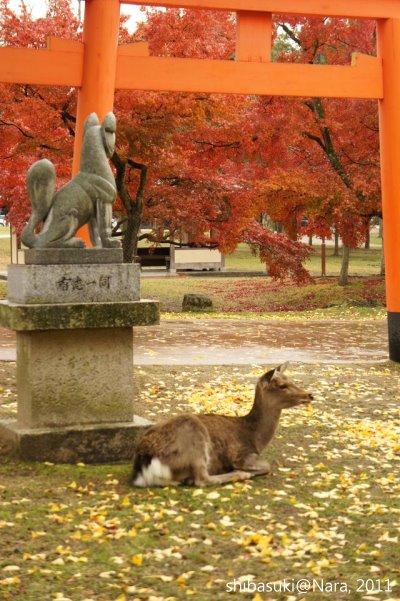 20111203-Nara_48_1.JPG