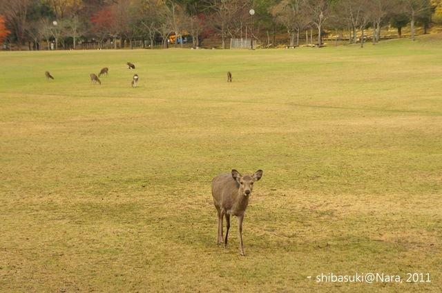 20111203-Nara_53_1.JPG