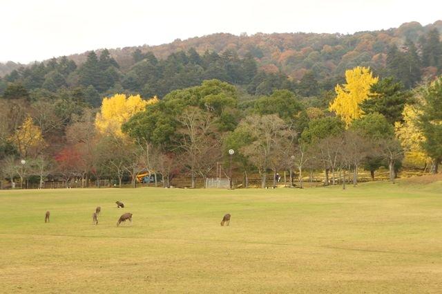20111203-Nara_54_1.JPG