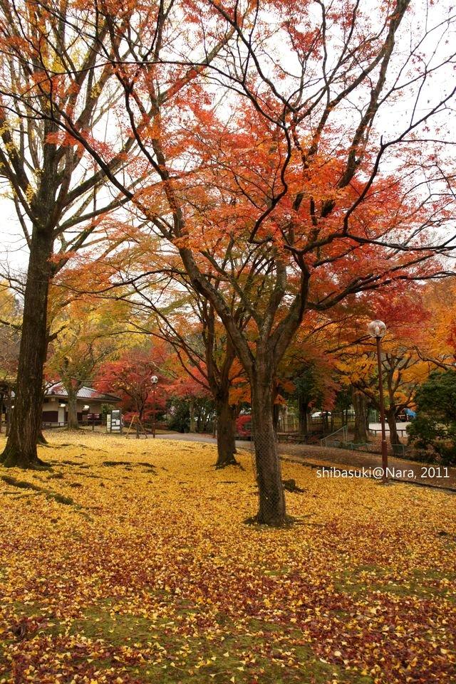 20111203-Nara_74_1.JPG