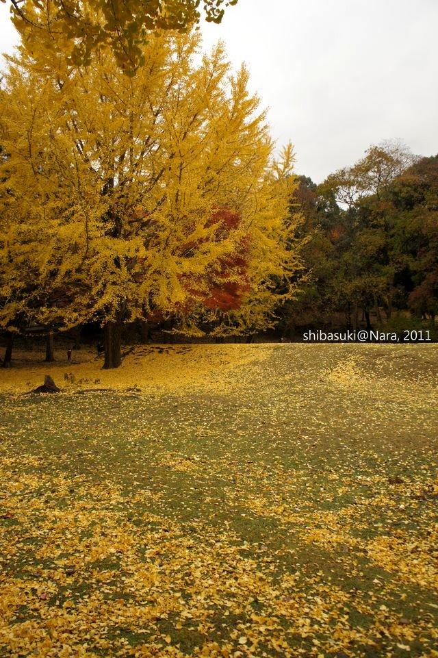 20111203-Nara_80_1.JPG