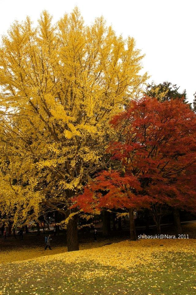20111203-Nara_92_1.JPG