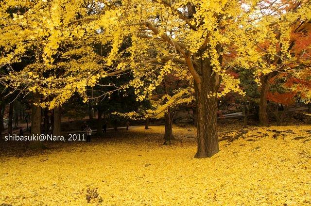 20111203-Nara_100_1.JPG