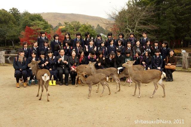 20111203-Nara_108_1.JPG