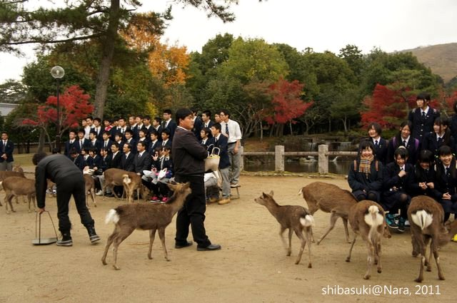 20111203-Nara_110_1.JPG