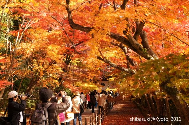 20111204_Kyoto-63_光明寺_1.JPG