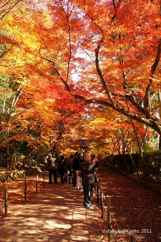 20111204_Kyoto-70_光明寺_1.JPG