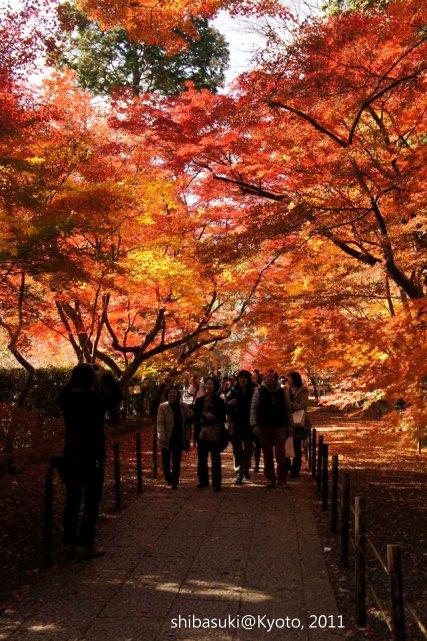 20111204_Kyoto-83_光明寺_1.JPG