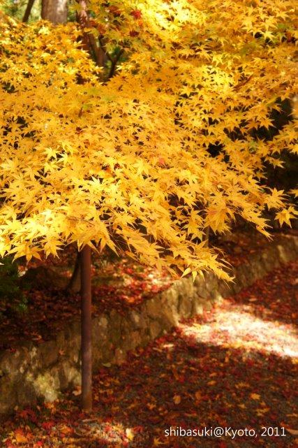 20111204_Kyoto-85_光明寺_1.JPG