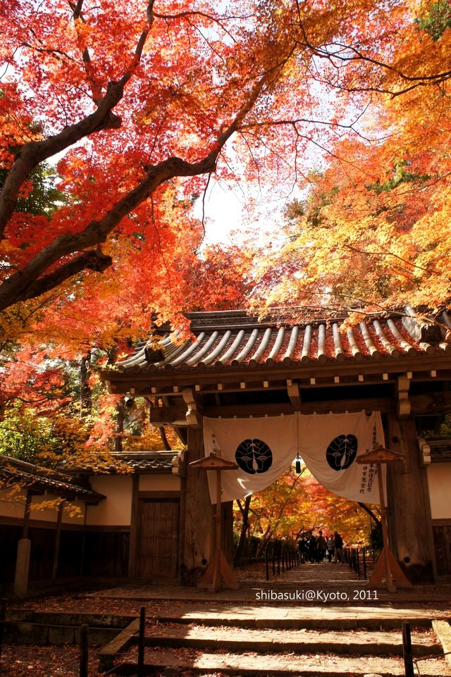 20111204_Kyoto-130_光明寺_1.JPG