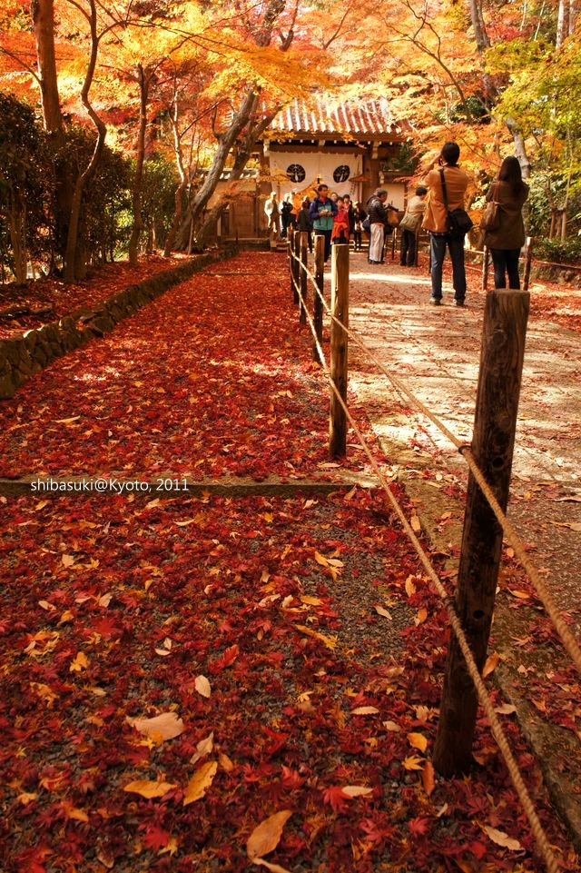20111204_Kyoto-142_光明寺_1.JPG