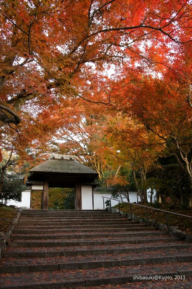20111204_Kyoto-186_安樂寺_1.JPG