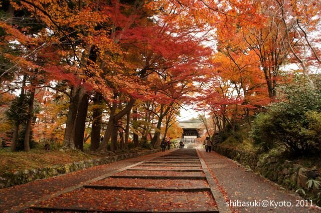 20111202_Kyoto-18_毘沙門堂_1.JPG