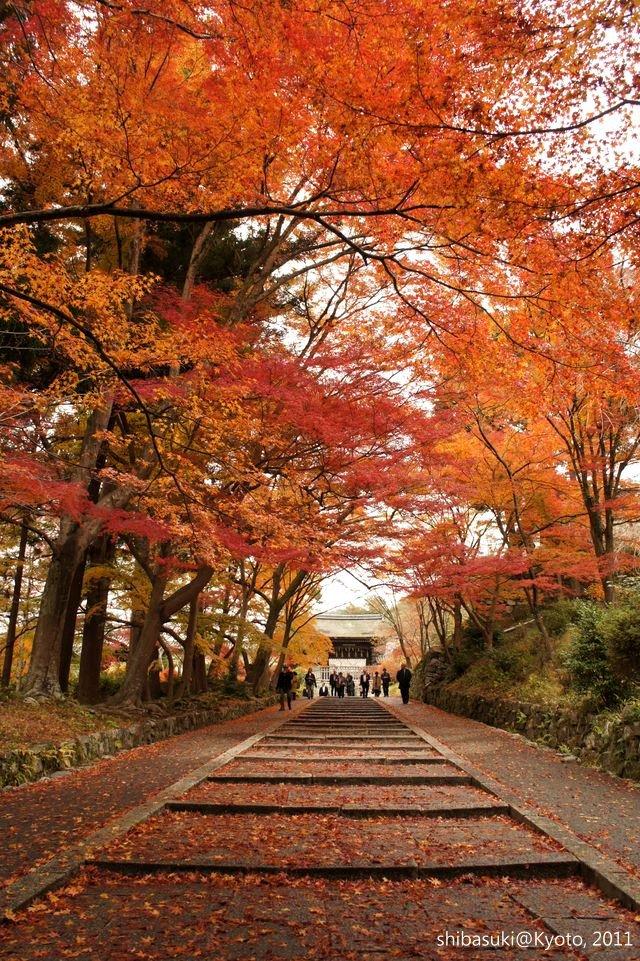 20111202_Kyoto-33_毘沙門堂_1.JPG