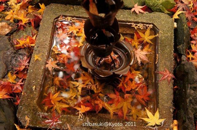 20111202_Kyoto-52_毘沙門堂_1.JPG